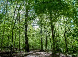 Fernbank Forest